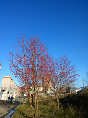 IMG_20131110_105619_small
